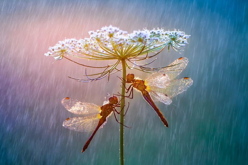 """Wyróżnienie: """"Parasol"""", fot. Petar Sabol"""