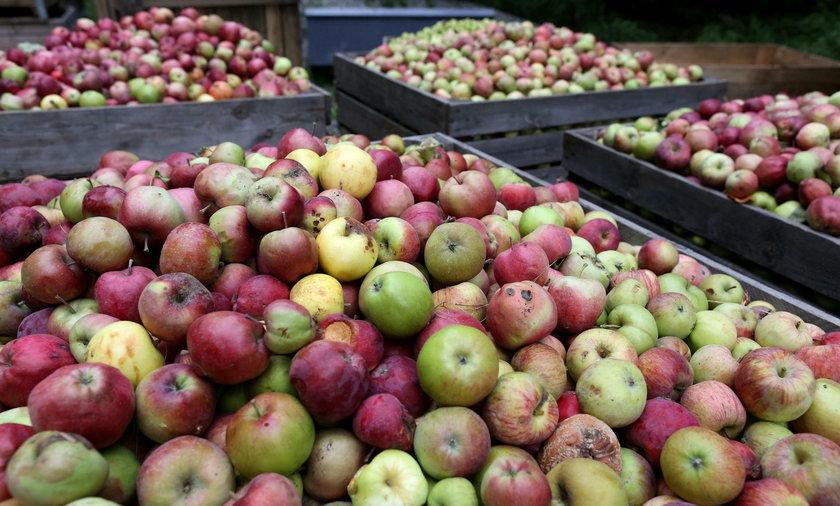 Sadownicy są wściekli na ceny jabłek
