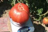 Kapitalac paradajz Prnjavor