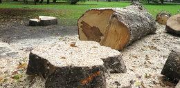 Nowe Lex Szyszko? Grozi nam kolejna hekatomba drzew!
