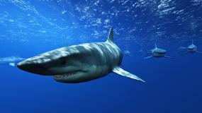 Rekin próbował zaatakować nurka. Mężczyzna odepchnął go ręką [WIDEO]