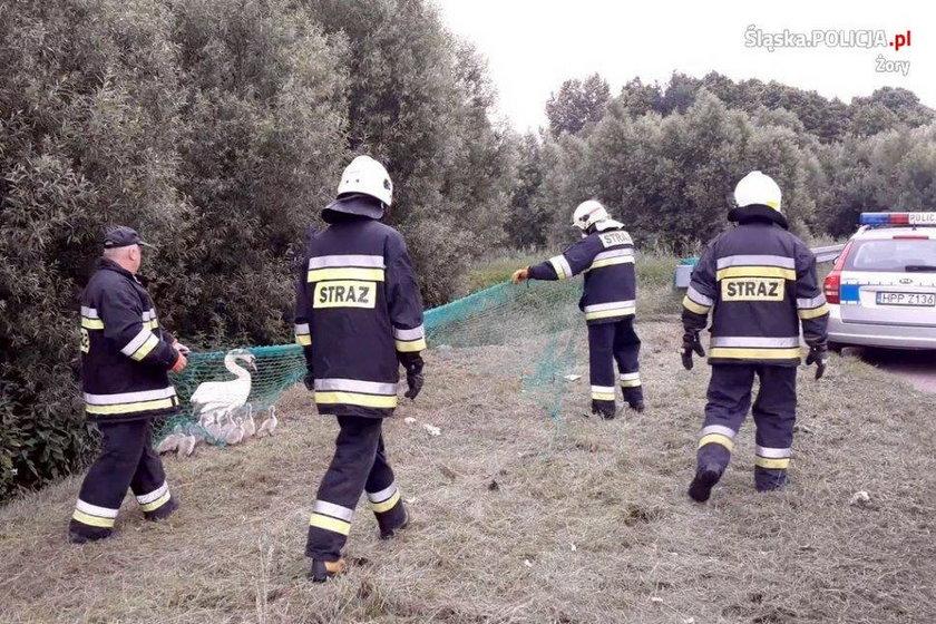 Strażacy uratowali nietypową rodzinę