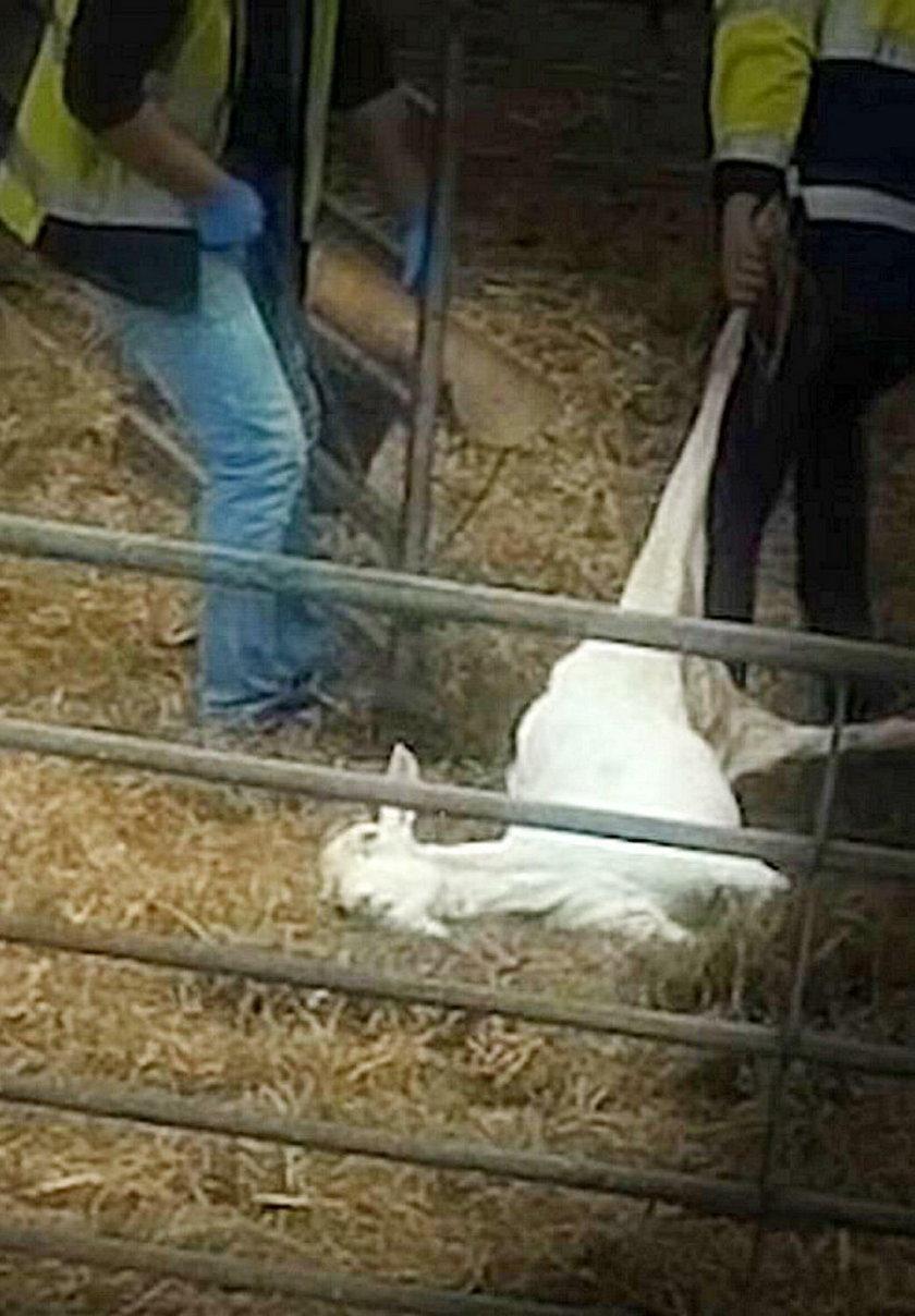 Horror w gospodarstwie rolnym w Wielkiej Brytanii