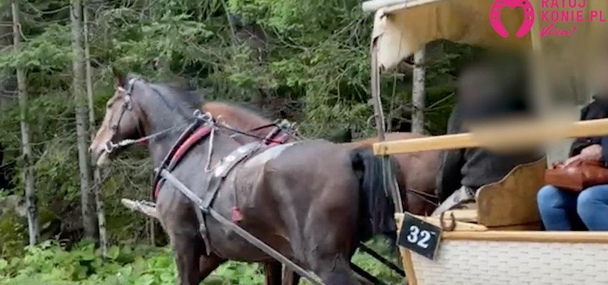 Kulawy koń ciągnął turystów do Morskiego Oka? Dramatyczne nagranie trafiło do sieci