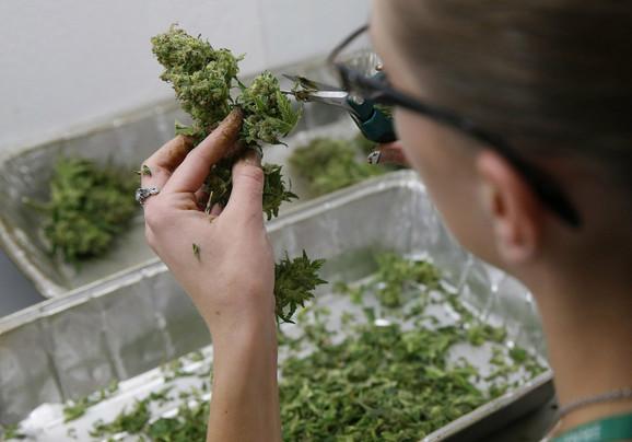 Marihuana samo u medicinske svrhe