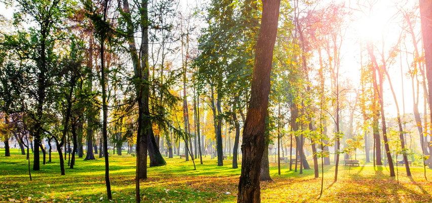Pogoda na środę 15 września. Zachmurzenie umiarkowane i ciepło. Na północnym zachodzie kraju słabe opady