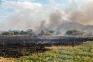 Biegły o pożarze w Biebrzańskim Parku Narodowym: Umyślne zaprószenie ognia w kilku miejscach