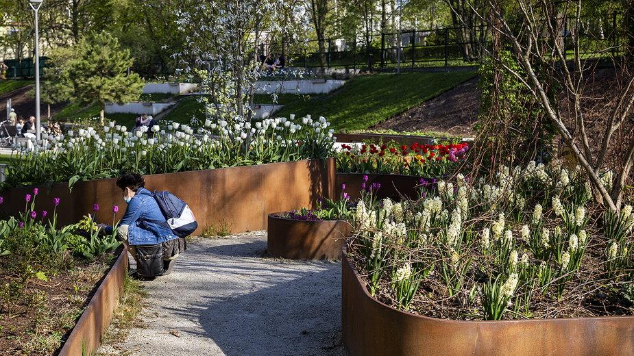 Park Centralny w Gdyni w kolorowej odsłonie [ZDJĘCIA]