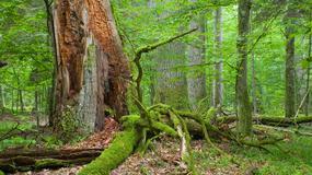 Najpiękniejsze przyrodniczo miejsca Podlasia