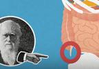 5 nieprzydatnych części ciała, które pozostały po ewolucji