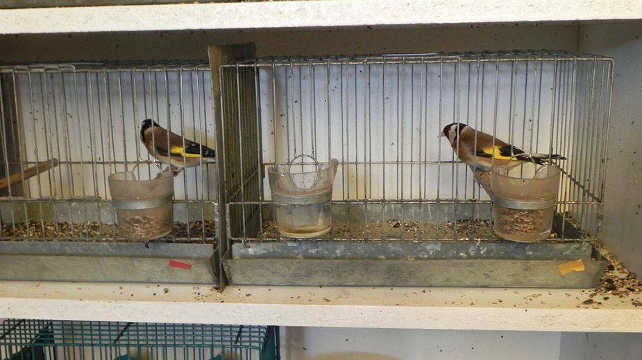 Tarnów. Łapał i kolekcjonował chronione gatunki ptaków