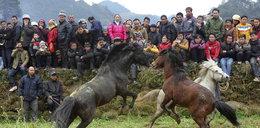 Okrucieństwo! Walki koni w Chinach. ZDJĘCIA!