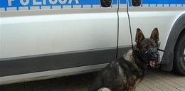 Mądry pies uratował niedoszłego samobójcę
