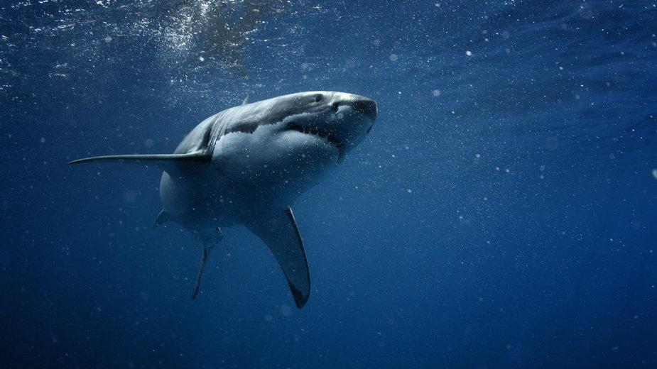 Rekiny przegoniły plażowiczów w Portugalii