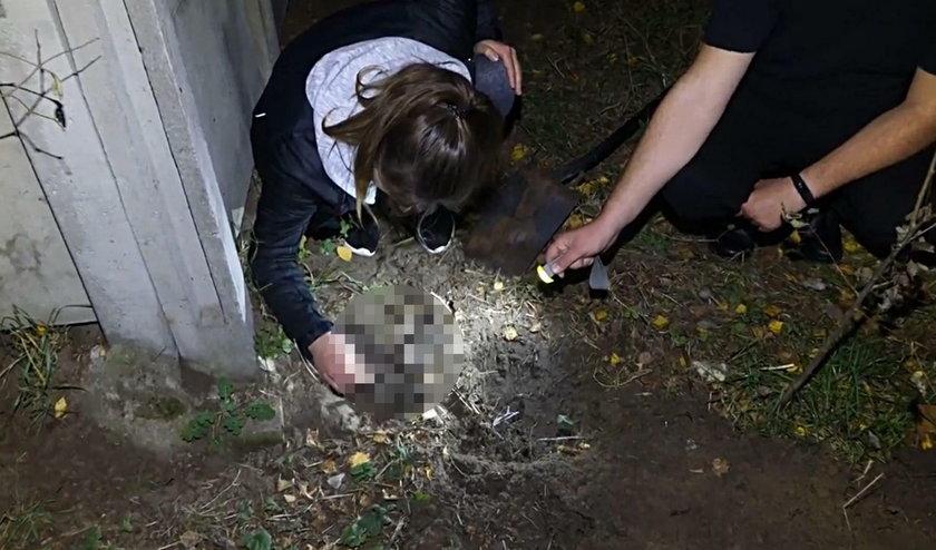 Nastolatek rozstrzelał zwierzęta i nagrał egzekucję