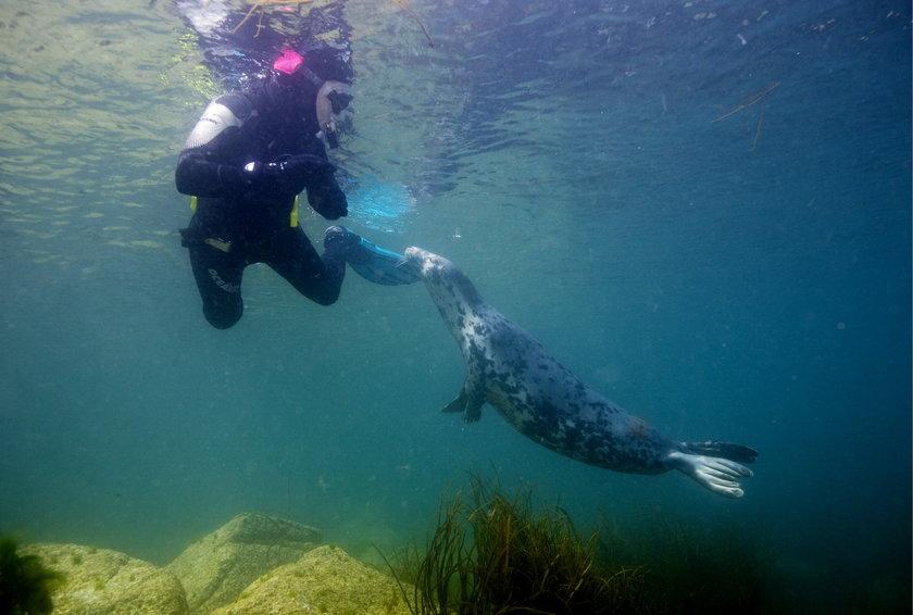 Nurkowanie z fokami