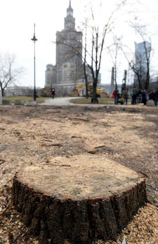 Warszawa: Trzaskowski wstrzymuje do piątku wycinkę drzew nad Wisłą
