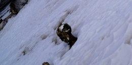 Ciała przeleżały pod śniegiem pół wieku!