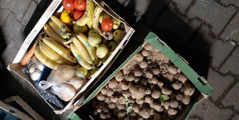 Nie kupują jedzenia, tylko wyciągają ze śmietników. Kim są polscy freeganie?