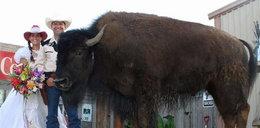 Mieszkają z bizonem
