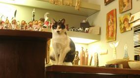 Kot, który pracuje w krakowskim muzeum