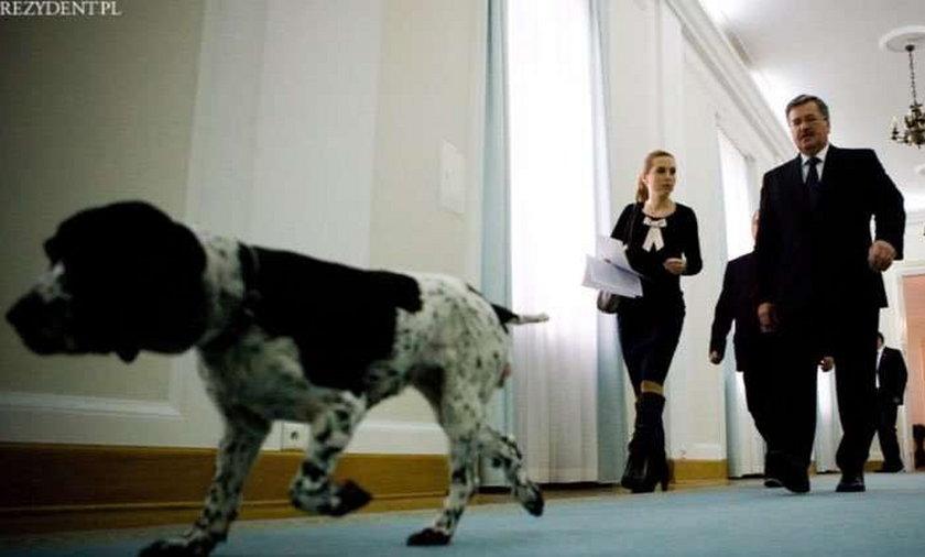 Prezydent z psem