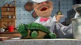Jak wygląda żółw od środka? Nie tak jak myślisz