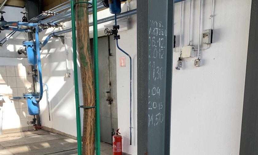 Rekordowy kaktus liczy 13 metrów