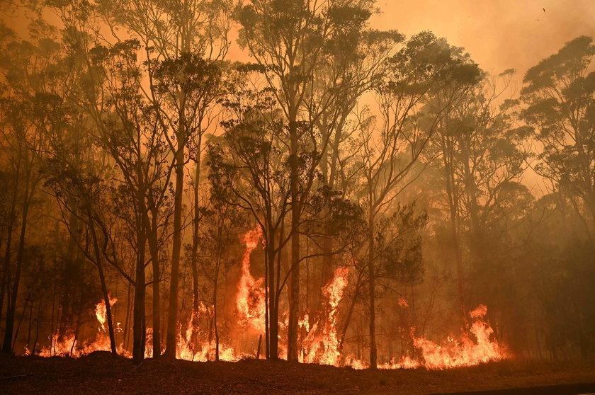 Tragiczne pożary w Australii