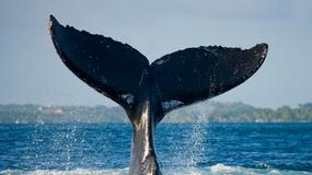 Taniec na martwym wielorybie