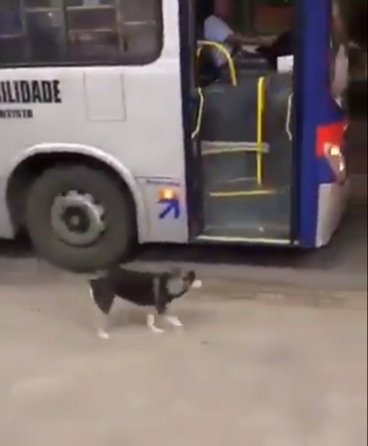 pas i vozač autobusa