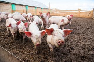 Przepisy pomogą zwalczać choroby zwierząt