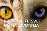 sorti_ocima_zivotinja_vesti_blic_safe