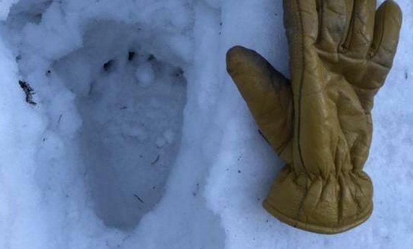 Tajemniczy ślad na śniegu zaniepokoił ratowników GOPR