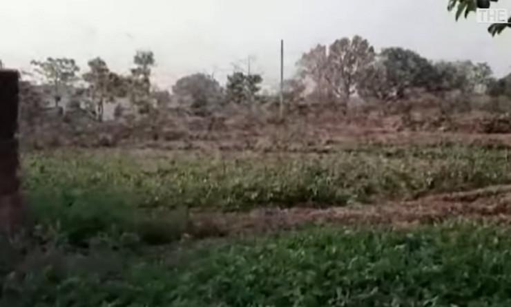 Skakavci invazija