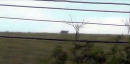 Ogromny drapieżnik grasuje przy polskiej granicy
