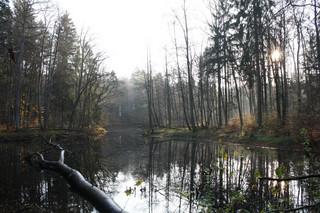 LP przebudują stawy w Lesie Miejskim koło Giżycka. Inwestycja może być zaprzeczeniem retencji wody
