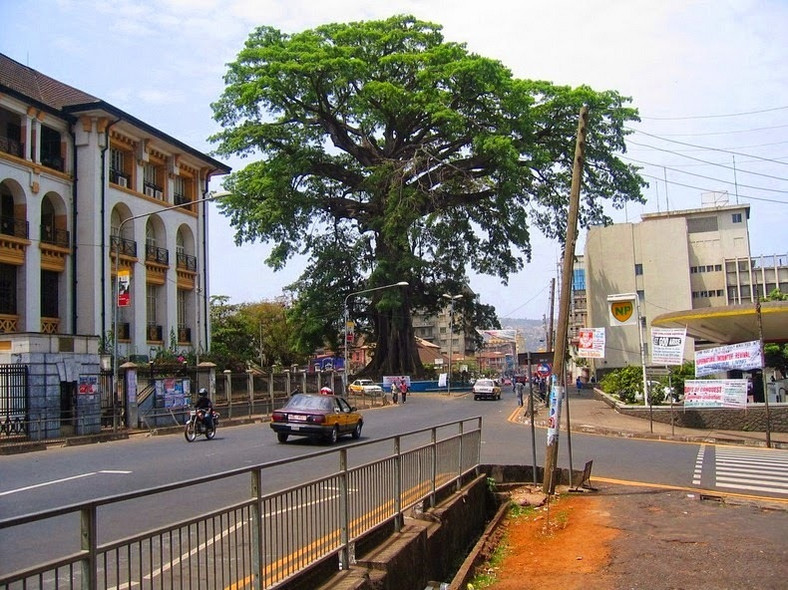 The famous cotton tree in Freetown. (Amusing Planet)