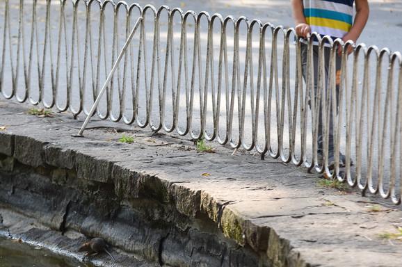 Pacovi u Dunavskom parku, Novi Sad