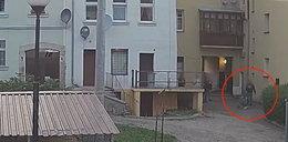 Straszne rzeczy dziejąsię w Dusznikach-Zdroju. Ludzie bojąsię wychodzić z domów!