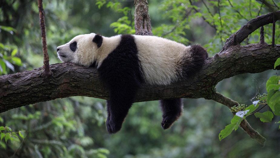 Dlaczego czasem warto być leniwym?