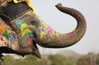 Wypadek ciężarówki przewożącej słonie w Hiszpanii