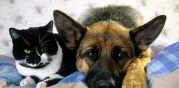 Szok! W Europie jedzą psy i koty! Gustują w nich...