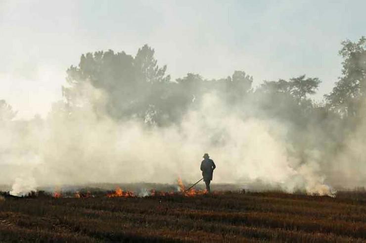 požar-njiva foto profimedia