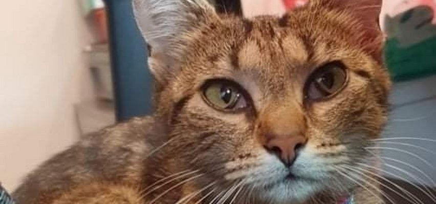 Koszmar pod Piłą. Ktoś wyrzucił kotkę w foliowym worku