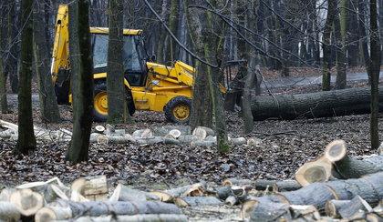 Ścinał drzewa w puszczy i zginął. Zabił go ciągnik