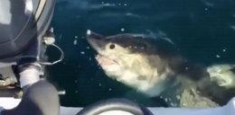 Rekin zaatakował rybaków! Zobacz FILM