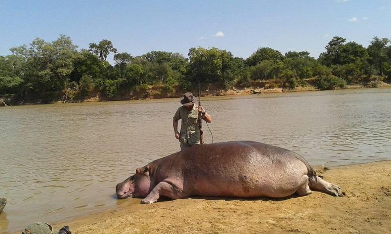 More than 1,250 hippopotami living in the valley are about to meet their bloody and gruesome end at the hands of South African game hunters.
