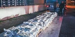 W kalafiorach przemycili marihuanę o wartości 4,5 mln zł!
