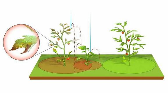 Istraživanje će pomoći da se bolje isplaniraju troškovi i na minimum svede šteta nastala od biljnih bolesti